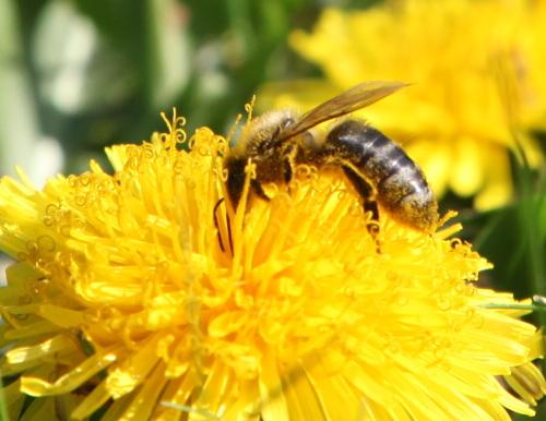 Bienen, Blogs und Bilder